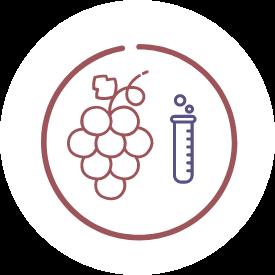 Creazione della mappa dei vitigni